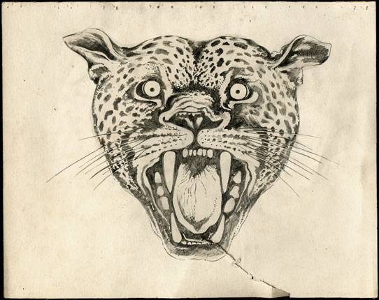 Leopard Head Drawing